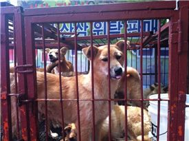 동물자유연대, '개 식용' 반대 말복 문화제 개최