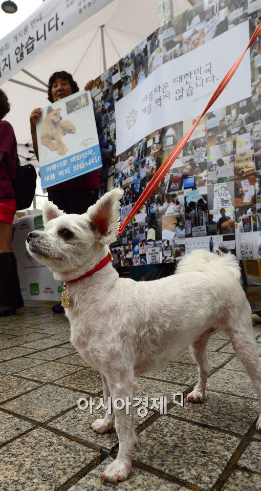 [포토]'아름다운 대한민국, 개를 먹지 않습니다'