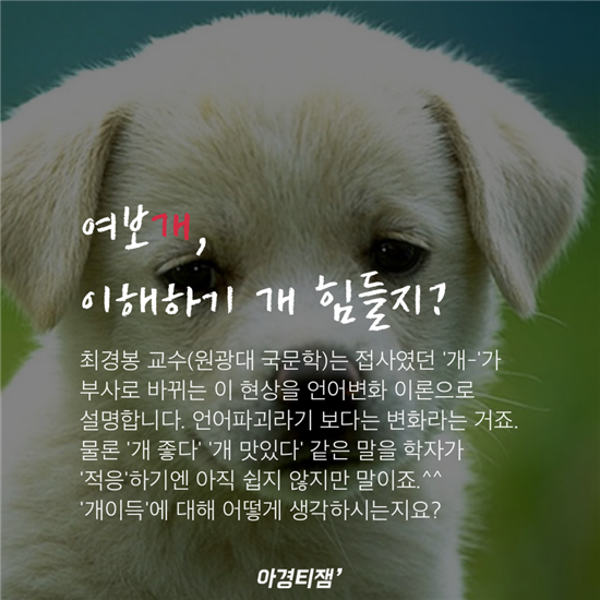 [카드뉴스]개를 대하는 인간의 자세에 관한 '개꿀팁'