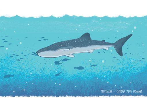 [사이언스포럼]멸치부터 고래상어까지
