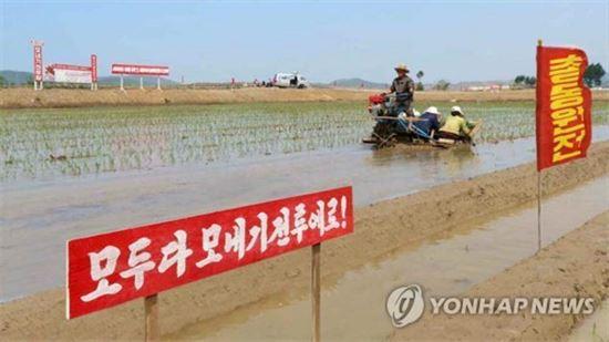 북한의 농장 모습(사진=연합뉴스)