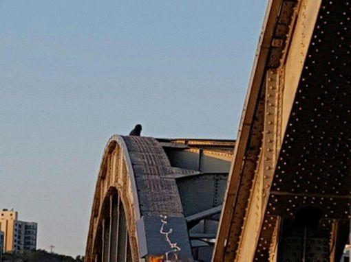 지난달 20일 60대 남성 한명이 서울 한강대교 아치 위에 올라가 투신소동을 벌여 소방당국이 구조활동을 했다.  (사진=연합뉴스)