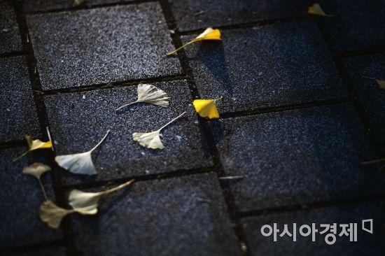 [포토]'가을 이별'