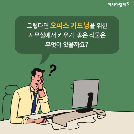 [카드뉴스]사무실이 건조하다면? '오피스 가드닝'으로 쾌적하게