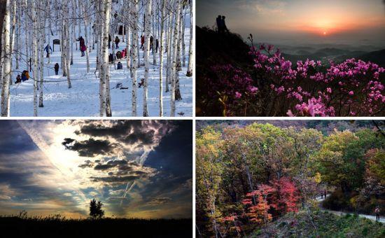 2017년 여행만리 첫 여행지인 인제 원대리자작나무숲은 사계절 어느때 찾아도 좋다. 하지만 눈덮인 순백의 숲은 감동 그 자체다. (왼쪽부터 시계방향) 억새못지 않은 간월재 철쭉군락, 금빛 트레일 ' 올림픽 아리바우길', 곧 사라질 광활한 대자연 우음도.