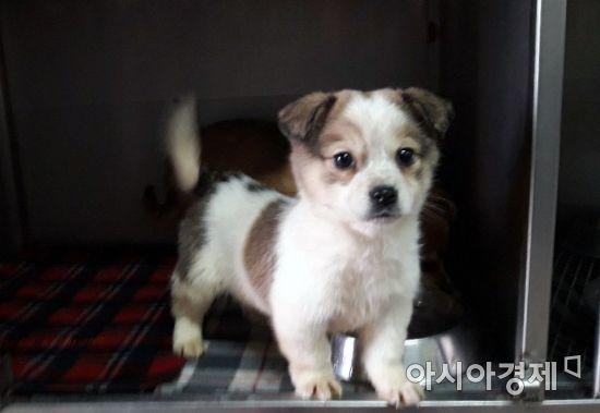 """""""집 앞에서 강아지를 주웠는데""""…'유기견 주작' 방송 논란"""