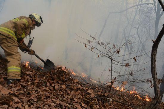 2016년 3월 서울 서초구 추모공원에 화재가 발생해 소방관들이 진압하고 있다. (사진=서울시 제공)