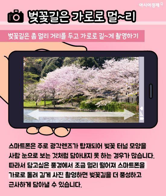 """[카드뉴스]""""내 벚꽃만 칙칙해ㅠㅠ""""...벚꽃 사진 잘 찍는 법 7가지"""