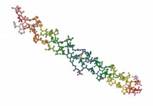 콜라겐의 구조