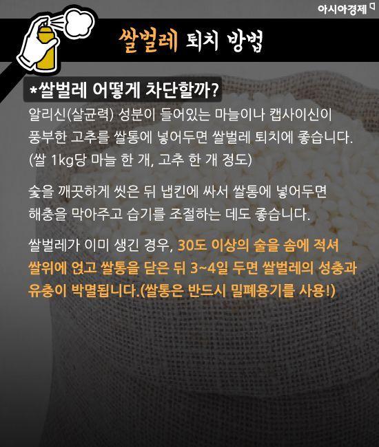 [카드뉴스]초파리부터 쌀벌레까지…골치 '집벌레 5종' 완전 퇴치법