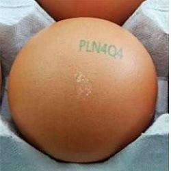 강원도 철원의 한 산란계 농가가 생산한 계란에서 품질 부적합 계란이 발견됐다. 난각 코드는 'PLN4Q4'. 사진제공=농림축산식품부