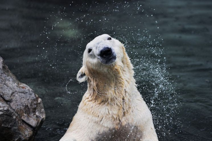 에벌내드 북극곰 통키