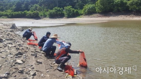영광군, 어업자원 증강 위한 보리새우·자라 방류