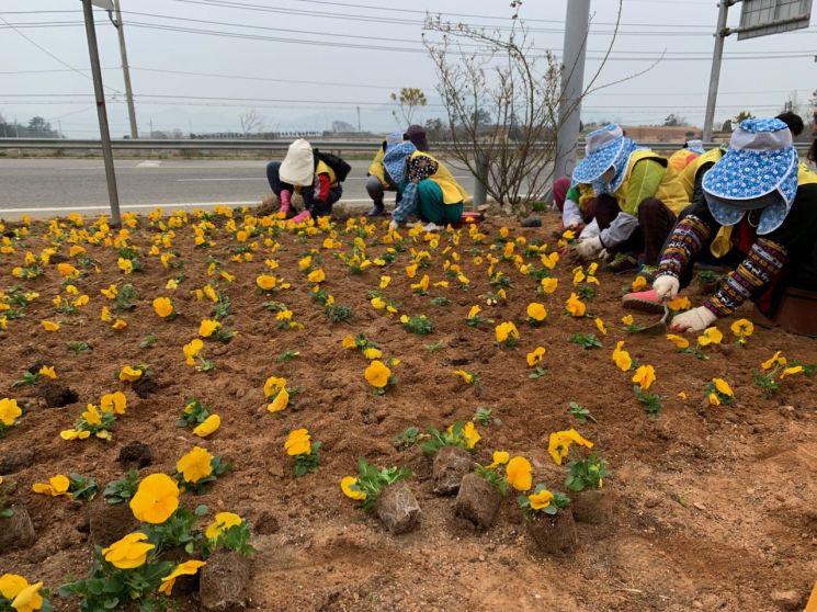 강진군 칠량면, 화려한 봄꽃으로 단장