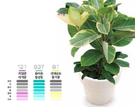 미세먼지 잡는 '공기정화식물', 정말 효과 있을까?...1평당 화분 1개씩 필요