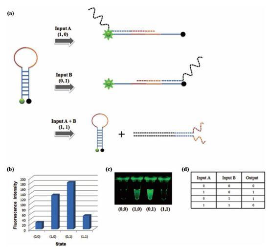 카이스트 생명화학공학과 박현규 교수 연구팀이 DNA를 이용한 논리게이트를 나타내는 데 성공했다. 그림은 논리게이트 구성도.