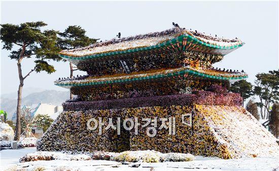 [포토]눈 덮힌 국화 숭례문
