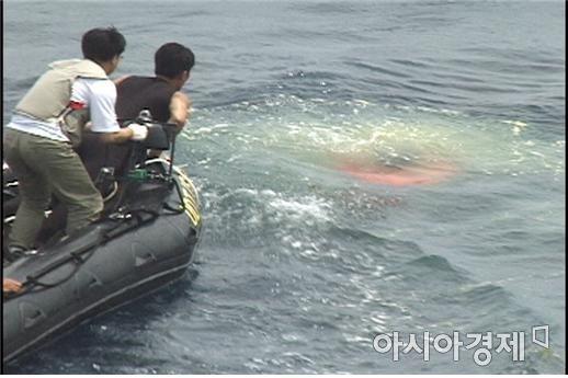 2001년 6월, 물속으로 가라앉는 청상어 시제를 향해 급히 몸을 뻗는 잠수대원의 모습.