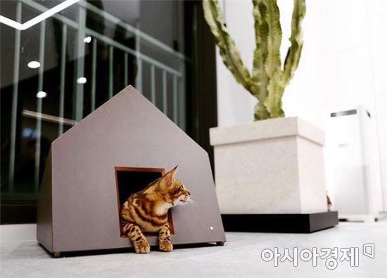 사진=고양이가 고양이 집에 들어가 고개를 내밀고 있는 모습. 은기호 제공.