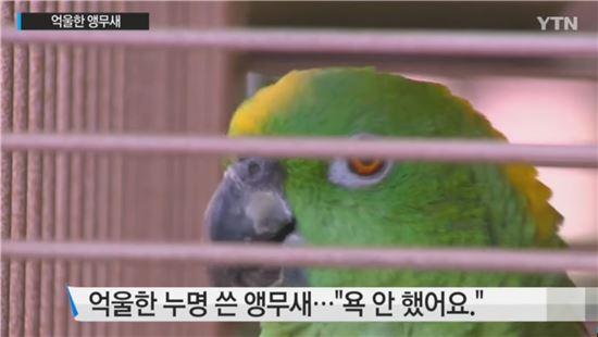 미국의 경우 앵무새가 욕설하는 광경이 포착되는 즉시 경찰과 동물보호센터에 신고, 학대혐의로 주인과 동물을 격리할 수 있다. 사진 = YTN 뉴스 화면 캡쳐