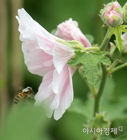 [포토]서울로7017에 날아든 꿀벌