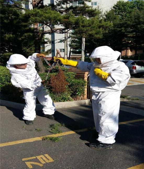 말벌집을 제거하는 모습. 말벌은 특히 치명적인 독성으로 인해 현재도 피해가 많이 발생한다. 고대에는 공성전에 무기로 많이 활용되기도 했다.(사진=아시아경제DB)