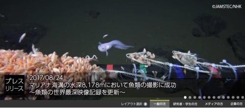 마리아나 해구 수심 8178m에서 촬영한 물고기/사진=일본 국립해양연구개발기구 홈페이 지 캡처