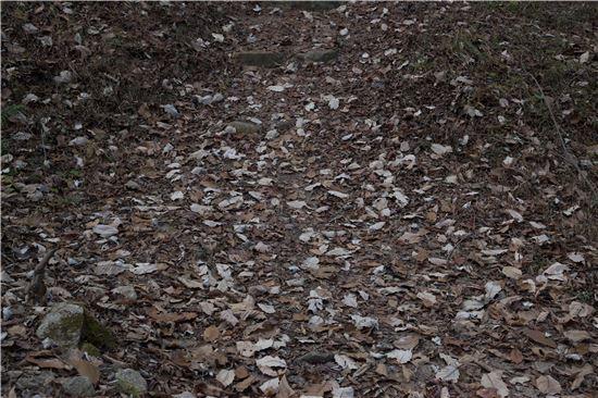[조문환의 지리산별곡 17] 겨울나무가지 예찬