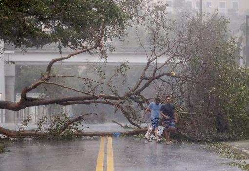 [이미지출처=연합뉴스]허리케인 '어마'가 10일(현지시간) 미국 플로리다주에 상륙한 가운데 강풍에 쓰러진 가로수가 마이애미 거리의 통행을 막고 있다.