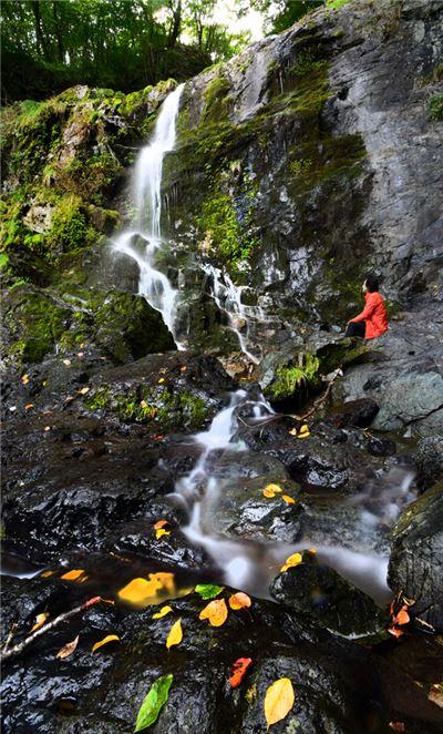 물소리가 봉황의 울음소리를 닮았다는 발교산 봉명폭포에 가을이 살포시 내려앉았다. 단풍잎 흘러내려 다리쉼을 하고 있는 왼편에 또 2단 폭포가 이어진다. (위 사진) 아래 사진은 횡성 여정에서 만난 가을 풍경들-황금빛에 물든 들녘, 미술관자작나무숲, 노을에 물든 횡성호숫길 코스모스, 봉명폭포가는길, 호숫길 물그림자, 가을하늘 아래 참깨 수확하는 부부, 야생화 핀 미술관자작나무숲.