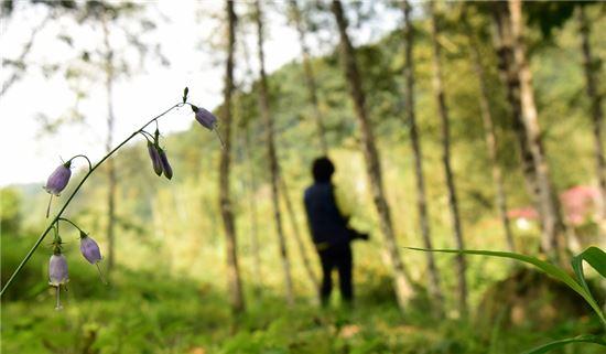 [여행만리]단풍잎 흘러내린 물소리 들리나요
