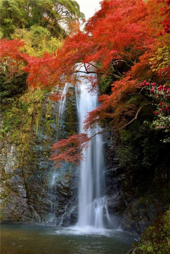 미노오 공원의 단풍 절경(사진=오사카부 미노오시 관광협회)