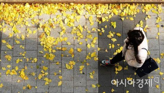 [포토]가을의 선물, 낙엽 황금길