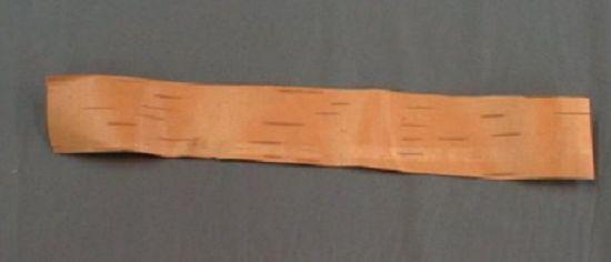조선 전통 활을 만드는데 필수품으로 쓰였던 화피(樺皮)의 모습. 한약재로도 쓰인다.(사진= 국립중앙과학관)