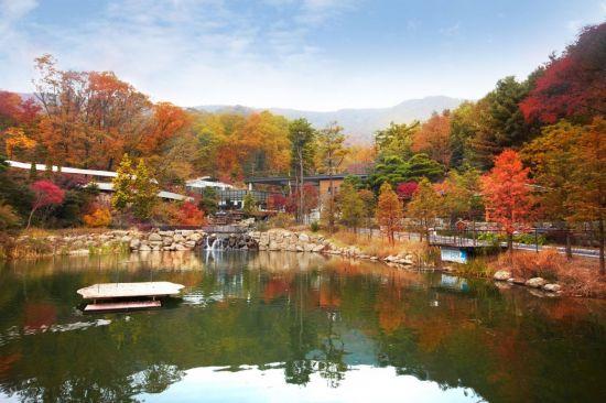 [여행·레저소식] 곤지암 화담숲 가을 야생화 축제 외