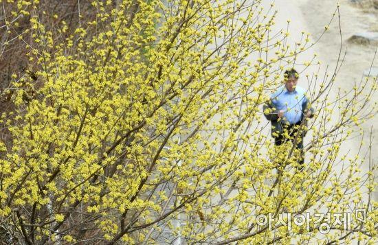 [포토] 봄소식 알리는 산수유꽃