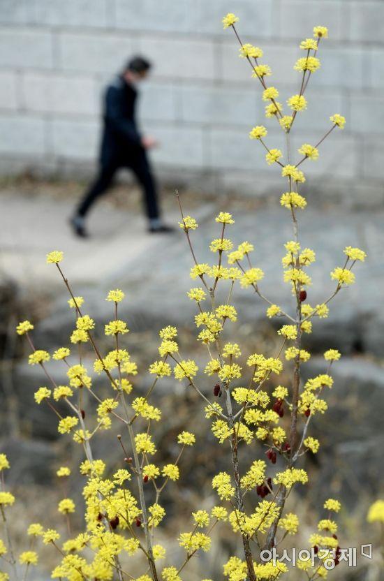 [포토] 청계천에 찾아온 봄