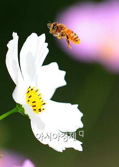 [포토] '꽃 향기에 취해~'