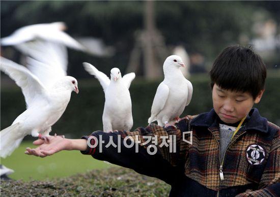 첨단무기속에서 다시 뜨는 비밀통신병 비둘기