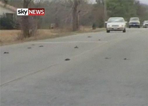 美 아칸소주 새떼 죽음은 외계인 소행?