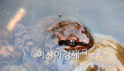 [포토] 서울에 찾아온 봄 소식