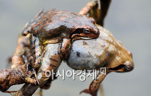[포토] 겨울잠에서 깨어난 개구리들