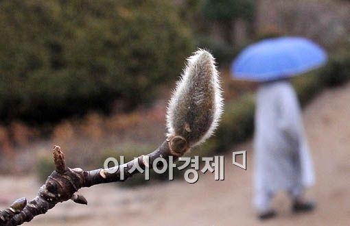 [포토] 봄 재촉하는 빗줄기