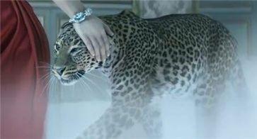 (사진: 까르띠에 광고 영상 캡쳐)