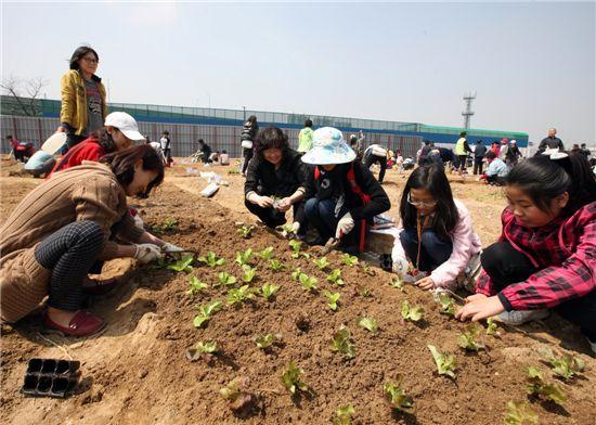 금천구 친환경 주말농장에서 주민들이 모종을 심고 있다.