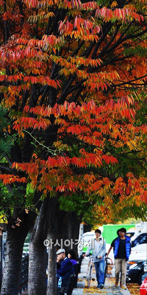 [포토]붉게 물들어 가는 가을