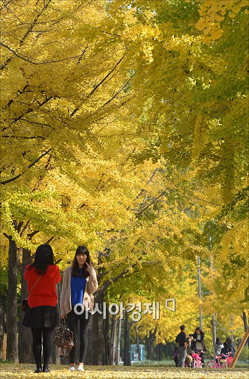 [포토]'가을 추억을 찍자'