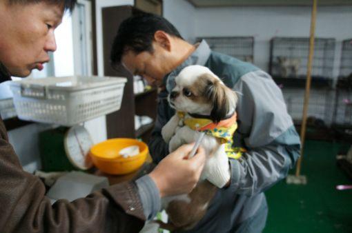 ▲ 지난 1일 경기도에 위치한 한 유기동물보호소에서 직원들이 구조된 유기견의 건강 상태를 살펴보고 있다.