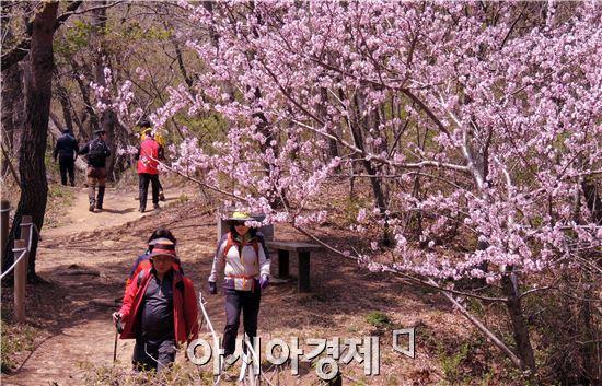 """봄철 등산객 조난 급증…""""주말·하산할 때 특히 조심"""""""