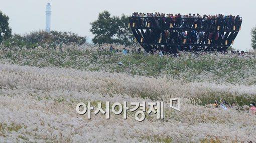 [포토]사람 반 억새 반